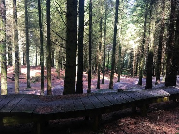 The forest centre has lots of mountain biking trails and training courses, for those who would rather cycle than forage.
